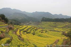 泰安到临沂兰陵农博园赏油菜花大巴一日游