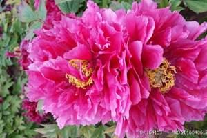 洛阳中国国花园门票价格多少钱