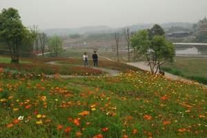 重庆驿都花海