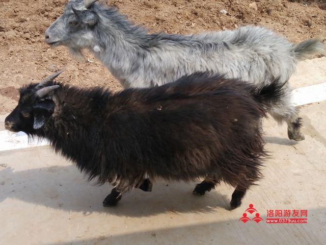 万安山野生动物园_河南洛阳旅游景点