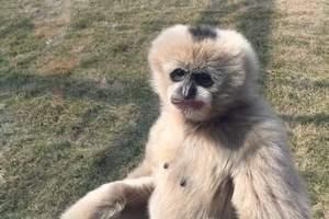 章丘野生动物园优惠门票预订-带孩子自驾游