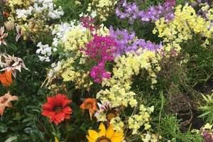 春暖花开下扬州--华东六市赏花六日游