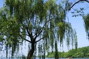 石家庄到杭州旅游线路(苏州、乌镇、西塘、寄畅园双飞五日游)