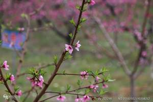 【赏花】连州地下河、湟川三峡、桃花节、油菜花休闲2天游