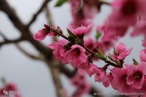 洛阳出发到巩义 长寿山+风情古镇一日游 赏红叶