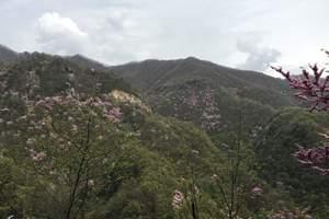 伏羲大峡谷一日游特惠
