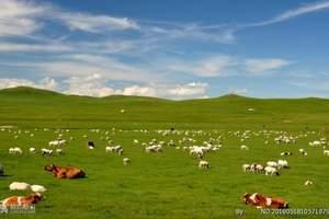 内蒙特价泉州晋江到内蒙古草原,银肯响沙湾、呼和浩特五日游
