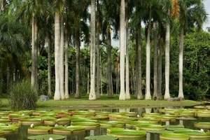 西双版纳植物园+傣族园+野象谷+森林公园+望天树四日游