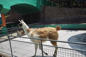 青岛发 济南野生动物园 大明湖 黑虎泉 芙蓉街跟团大巴二日游