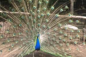 阿城动物园一日游 阿城动物园门票多少钱 阿城动物园咨询电话