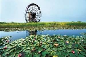 11月宁波出发到杭州西溪湿地、花港观鱼一日游  杭州旅游