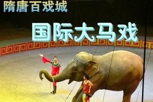隋唐马戏城表演_隋唐大马戏演出_万安山看动物、看大马戏一日游