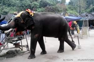 宜昌到云南西双版纳旅游_昆明、普洱、大象、西双版纳三飞六日游