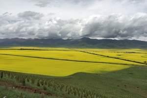 青海湖、茶卡盐湖、祁连、门源风情纯玩三日游