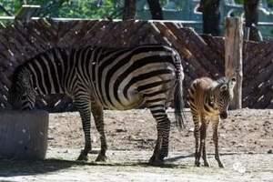 1月宁波到杭州野生动物园狂欢一日  周边一日