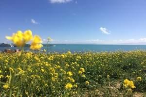 青海湖+茶卡盐湖+塔尔寺+祁连卓尔山3日纯玩无购物畅游