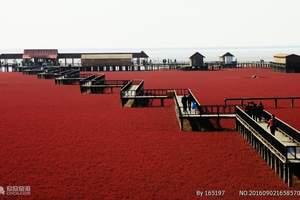 大连到盘锦红海滩+笔架山休闲二日游|大连盘锦红海滩什么时候红