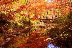 长春到红叶谷旅游团 长春出发到红叶谷 松花湖 金珠花海2日游