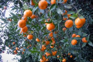 烧烤采摘游:登山、采草莓/枇杷/橘子、赏太湖美景,休闲一日游
