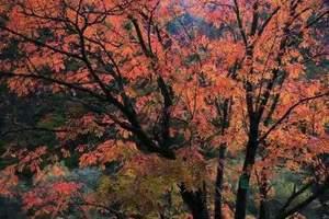 秋天成都去卡龙沟 达古冰川 奶子沟彩林红叶摄影三日游线路