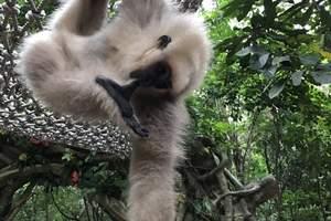 青岛到长隆跟团游:长隆野生动物园、水上乐园、国际大马戏五日游