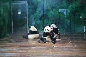 【亲子游推荐】青岛到广州长隆野生动物园、欢乐世界双飞四日游