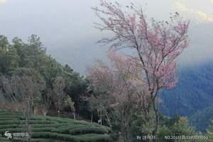 洛阳 出发到武汉 赏樱花、品美食纯玩两日游