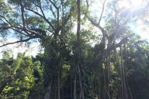 西双版纳原始森林公园+植物园,傣族园纯玩二日游