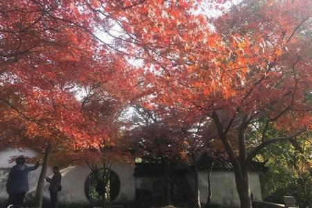 【2019春节-玩美苏杭】青岛去苏杭水乡新体验4日游