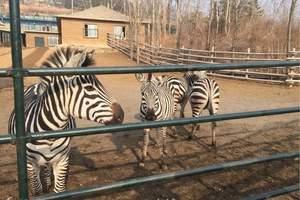 6月宁波到上海野生动物园、俄罗斯大马戏  亲子游推荐