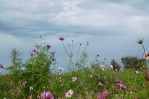 石家庄自然山水滚龙沟摘蜜桃一日游 石家庄周边游