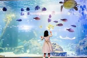 郑州锦艺城海洋馆门票预订 郑州锦艺城海洋馆门票价格