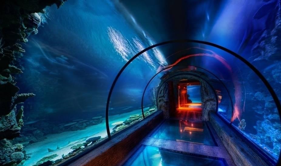 开封东京大全海洋馆攻略回避神极地2图片