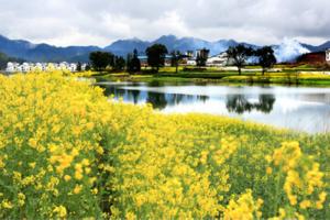 洛阳春季踏青夕阳红旅游专列_南京、扬州、黄山千岛湖、婺源七日