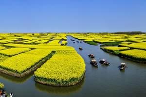 3-4月赏油菜花:苏州到兴化千垛油菜花,醉美花海赏花一日游
