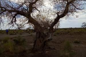 额济纳旗胡杨林-丹巴沙漠-黑城遗址-居延海-嘉峪关-张掖8天