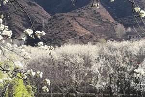 成都色达佛学院+金川梨花+丹巴甲居藏寨+四姑娘山4天 西途游