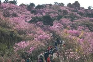 济南到青岛、黄岛大珠山赏杜鹃、中山公园赏樱花2日游|休闲游