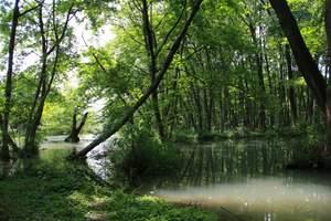 杭州西溪湿地+京杭大运河(含船)+宋城千古情纯玩一日游推荐