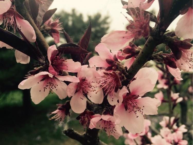 疫去春来,正是赏花踏青好时光,太原赏花路线攻略_太原旅游攻略