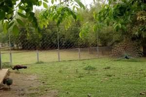 东莞香市动物园门票预订东莞电子门票当天可订预售抢购