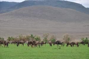 坦桑尼亚发现之旅9日游