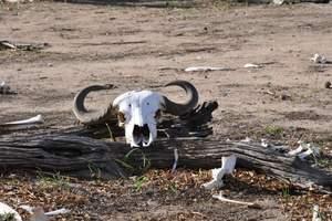 非洲旅游线路推荐:坦桑尼亚10日游 塞伦盖蒂大草原