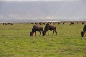非州旅游、去野性的斑斓-坦桑尼亚桑给巴尔10天