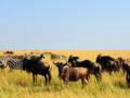深圳去肯尼亚动物迁徙摄影创作13天之旅 广州往返