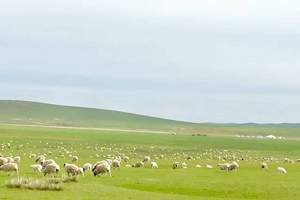 呼伦贝尔大草原,俄罗斯风情,边防风景线3日自由行(住蒙古包)