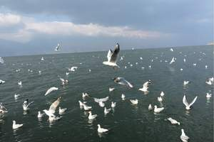 淄博去威海 奇迹家时光 沙雕海滩 海洋牧场二日游