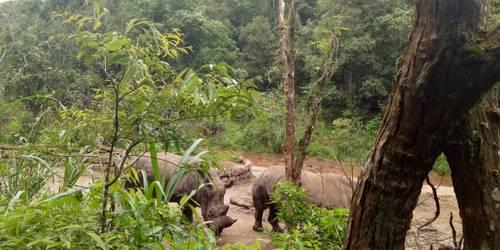 太阳河国家森林公