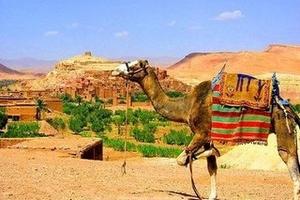 摩洛哥(里奇咖啡+阿里之家+沙漠酒店+舍夫沙万+菲斯)11日