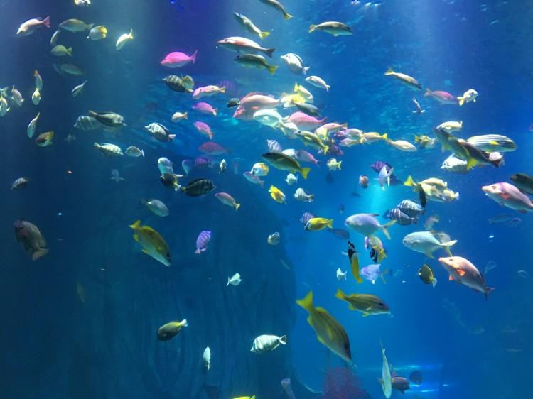 重庆杜莎夫人蜡像馆 海洋探索中心一日游